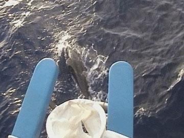 delfin-under-mormorbroen.jpg